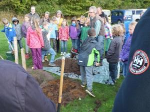 Um dem Baum einen guten Start zu ermöglichen, wird die ausgehobene Erde mit gut abgelagertem Mist und Urgesteinsmehl/Bentonit vermischt